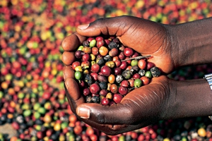 Кофе из Африки
